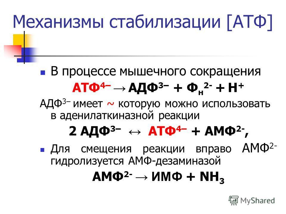 Механизмы стабилизации [АТФ] В процессе мышечного сокращения АТФ 4– АДФ 3– + Ф н 2- + Н + АДФ 3– имеет ~ которую можно использовать в аденилаткиназной реакции 2 АДФ 3– АТФ 4– + АМФ 2-, Для смещения реакции вправо АМФ 2- гидролизуется АМФ-дезаминазой