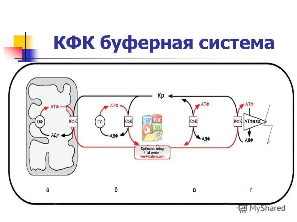 КФК буферная система