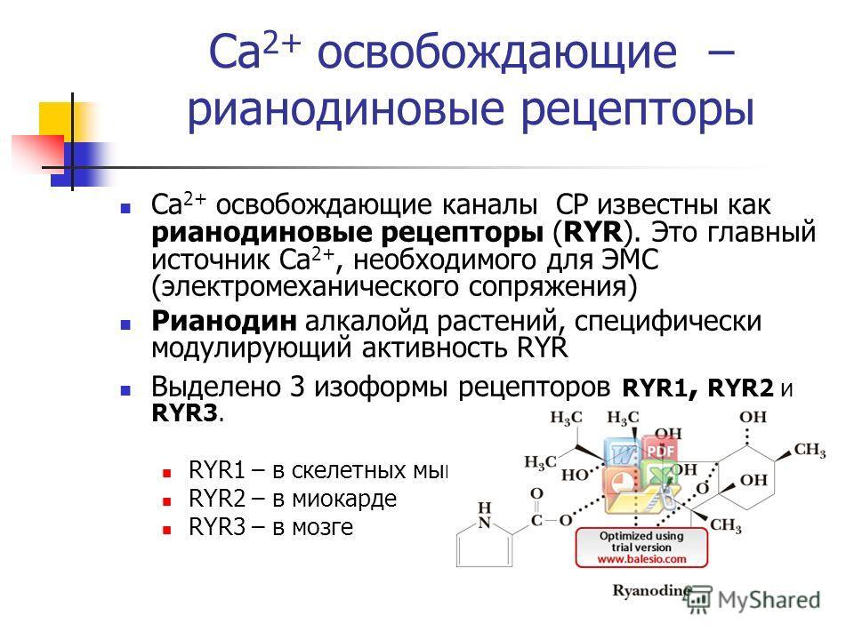 Ca 2+ освобождающие – рианодиновые рецепторы Ca 2+ освобождающие каналы СР известны как рианодиновые рецепторы (RYR). Это главный источник Ca 2+, необходимого для ЭМС (электромеханического сопряжения) Рианодин алкалойд растений, специфически модулиру