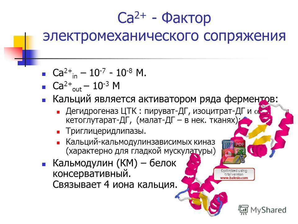 Ca 2+ - Фактор электромеханического сопряжения Ca 2+ in – 10 -7 - 10 -8 М. Ca 2+ out – 10 -3 М Кальций является активатором ряда ферментов: Дегидрогеназ ЦТК : пируват-ДГ, изоцитрат-ДГ и - кетоглутарат-ДГ, (малат-ДГ – в нек. тканях); Триглицеридлипазы