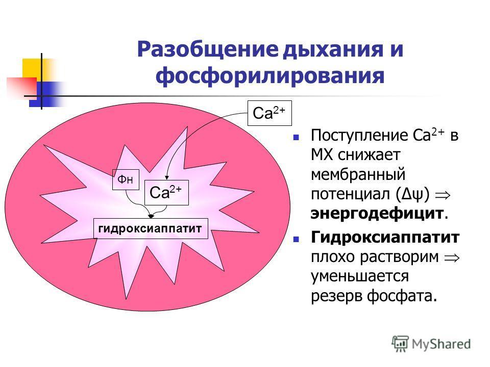 Разобщение дыхания и фосфорилирования Поступление Ca 2+ в МХ снижает мембранный потенциал (Δψ) энергодефицит. Гидроксиаппатит плохо растворим уменьшается резерв фосфата. Ca 2+ Фн гидроксиаппатит