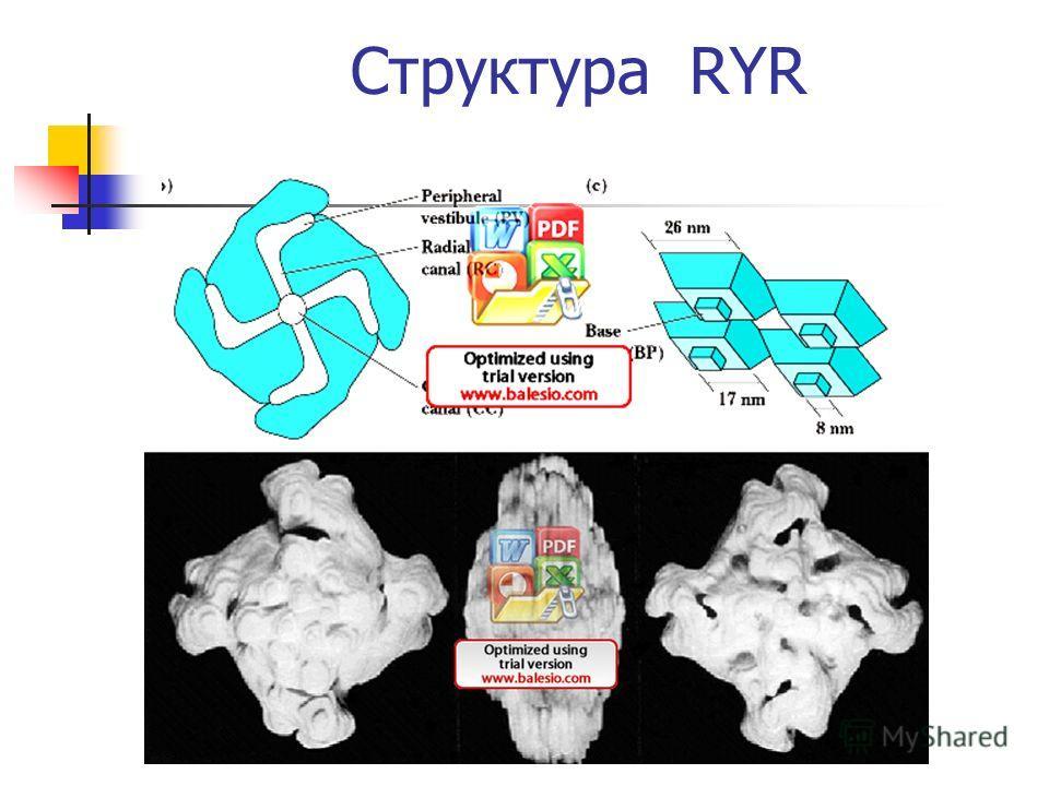 Структура RYR