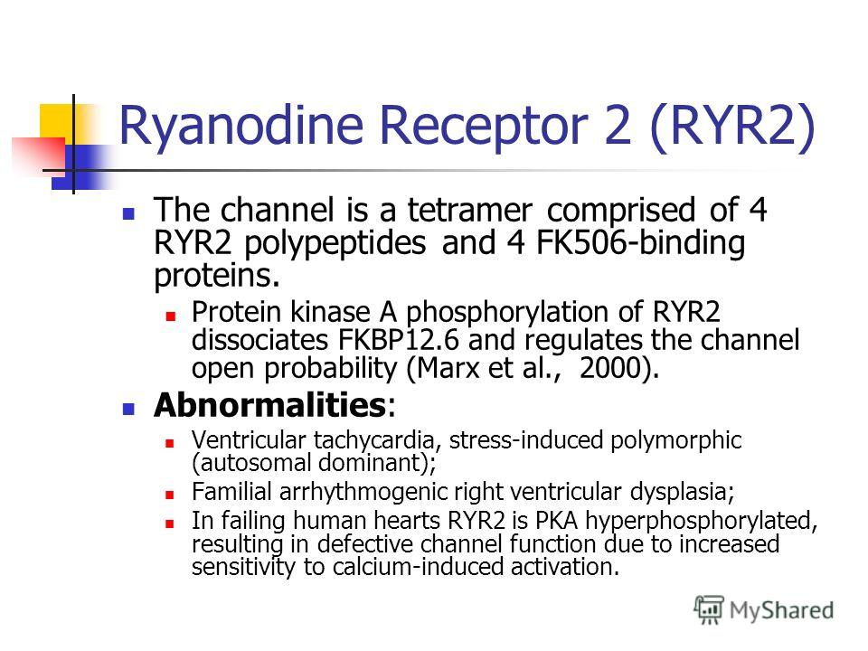 Ryanodine Receptor 2 (RYR2) The channel is a tetramer comprised of 4 RYR2 polypeptides and 4 FK506-binding proteins. Protein kinase A phosphorylation of RYR2 dissociates FKBP12.6 and regulates the channel open probability (Marx et al., 2000). Abnorma