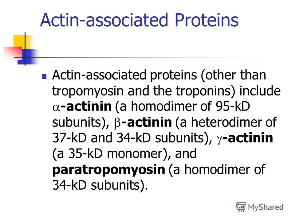 Actin-associated Proteins Actin-associated proteins (other than tropomyosin and the troponins) include -actinin (a homodimer of 95-kD subunits), -actinin (a heterodimer of 37-kD and 34-kD subunits), -actinin (a 35-kD monomer), and paratropomyosin (a