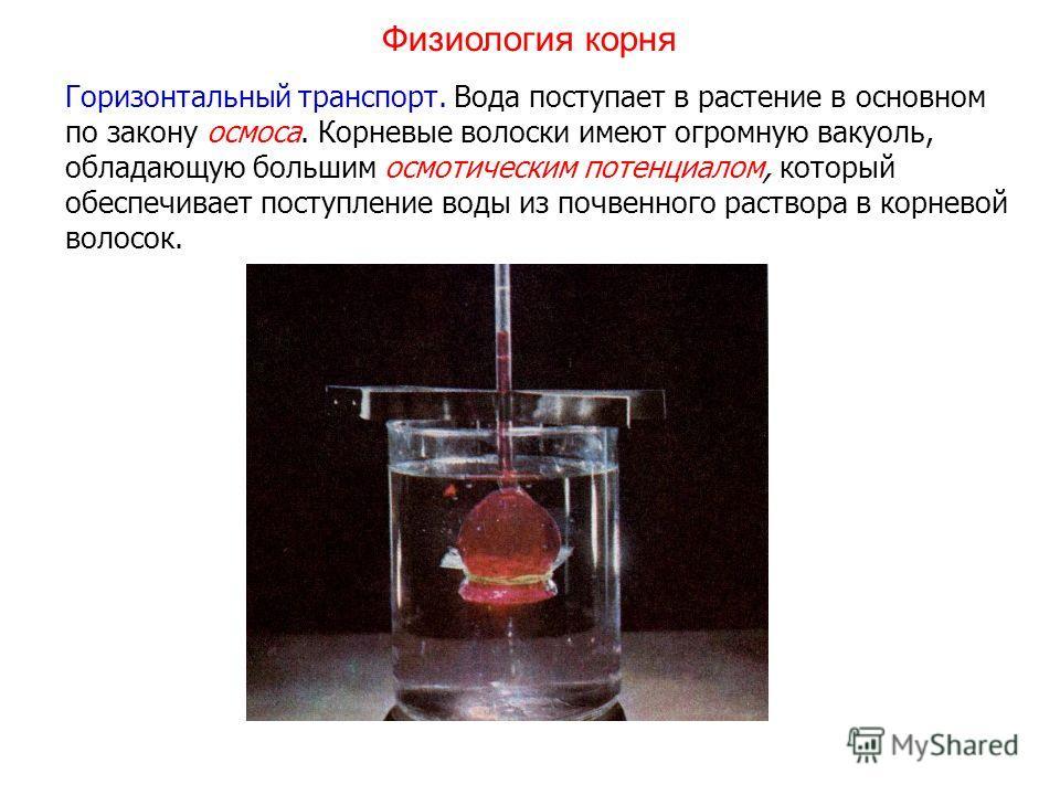 Горизонтальный транспорт. Вода поступает в растение в основном по закону осмоса. Корневые волоски имеют огромную вакуоль, обладающую большим осмотическим потенциалом, который обеспечивает поступление воды из почвенного раствора в корневой волосок. Фи
