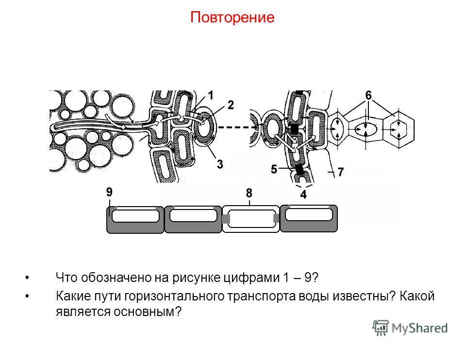 Что обозначено на рисунке цифрами 1 – 9? Какие пути горизонтального транспорта воды известны? Какой является основным? Повторение