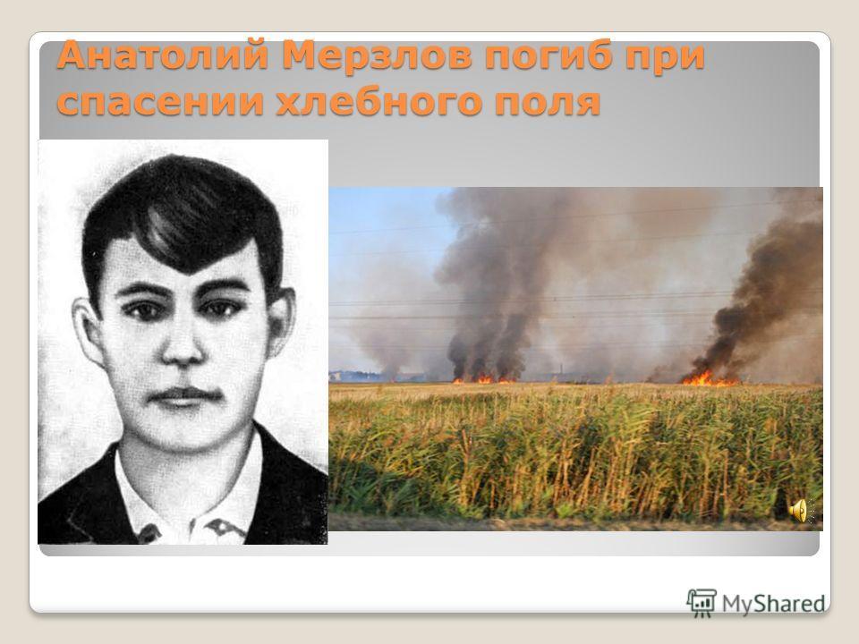 Анатолий Мерзлов погиб при спасении хлебного поля