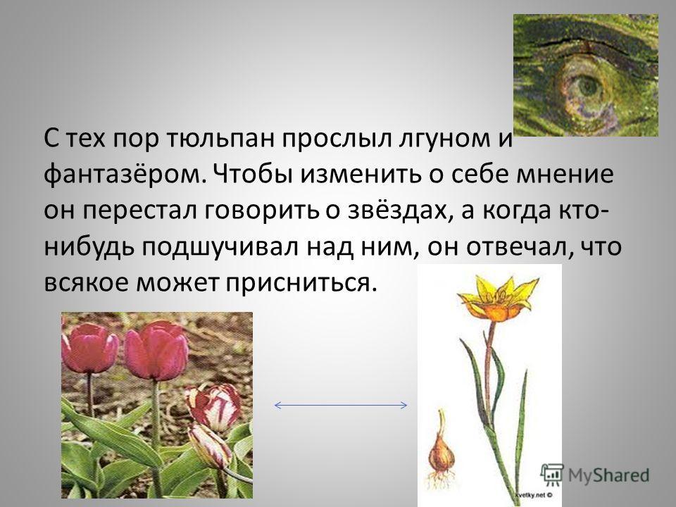 С тех пор тюльпан прослыл лгуном и фантазёром. Чтобы изменить о себе мнение он перестал говорить о звёздах, а когда кто- нибудь подшучивал над ним, он отвечал, что всякое может присниться.