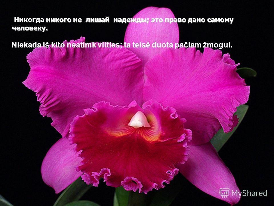 OРХИДЕИ OРХИДЕИ Mузыка : Осенняя Роза Vietnamo Orchidėjos
