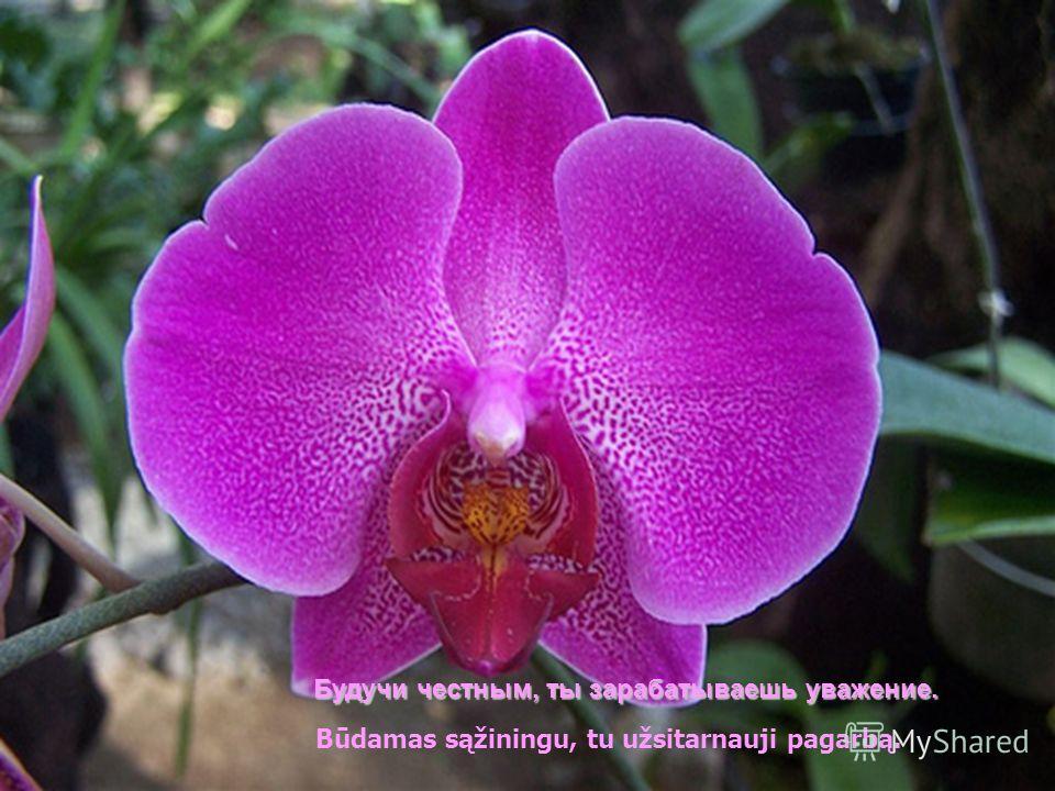 Phragmipedium Cardinale Подбодряй своих друзей. Padrąsink savo draugus.