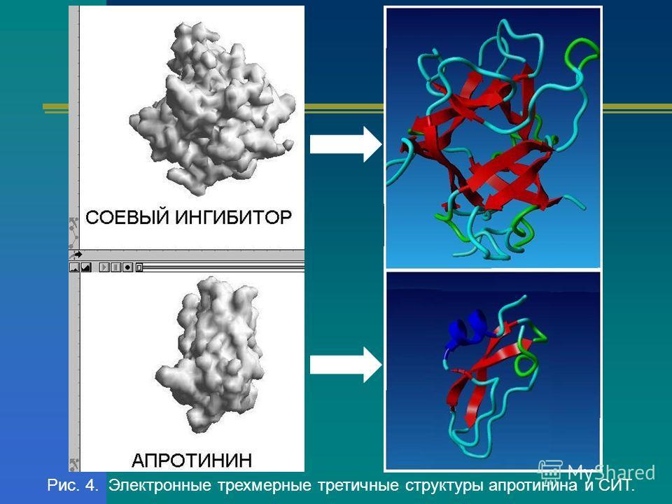Рис. 4. Электронные трехмерные третичные структуры апротинина и СИТ.