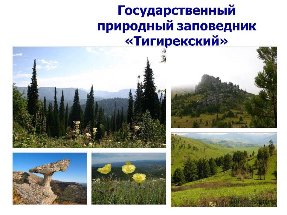 Государственный природный заповедник «Тигирекский»