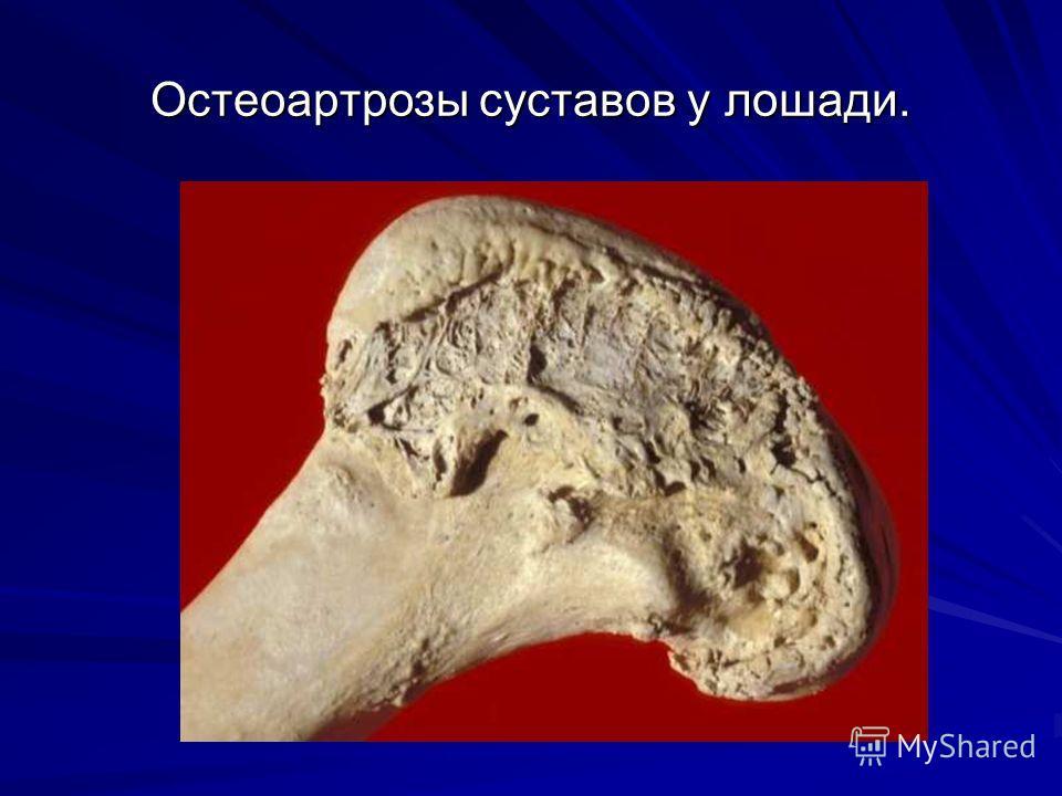 Остеоартрозы суставов у лошади.