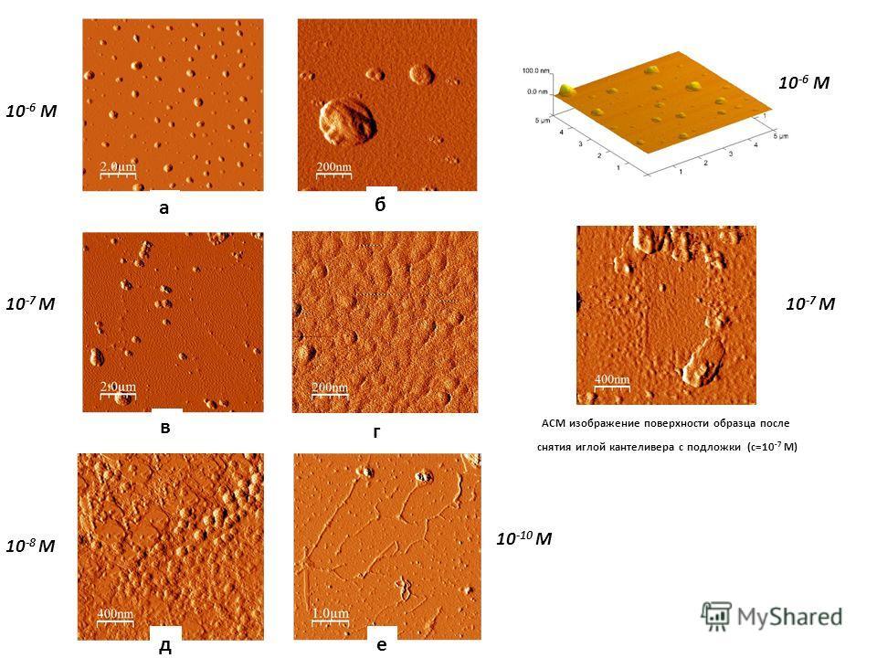 АСМ изображение поверхности образца после снятия иглой кантеливера с подложки (с=10 -7 М) 10 -10 М 10 -6 М 10 -7 М 10 -6 М 10 -7 М 10 -8 М а б в г д е