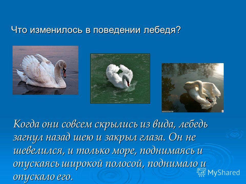 Что изменилось в поведении лебедя? Когда они совсем скрылись из вида, лебедь загнул назад шею и закрыл глаза. Он не шевелился, и только море, поднимаясь и опускаясь широкой полосой, поднимало и опускало его.