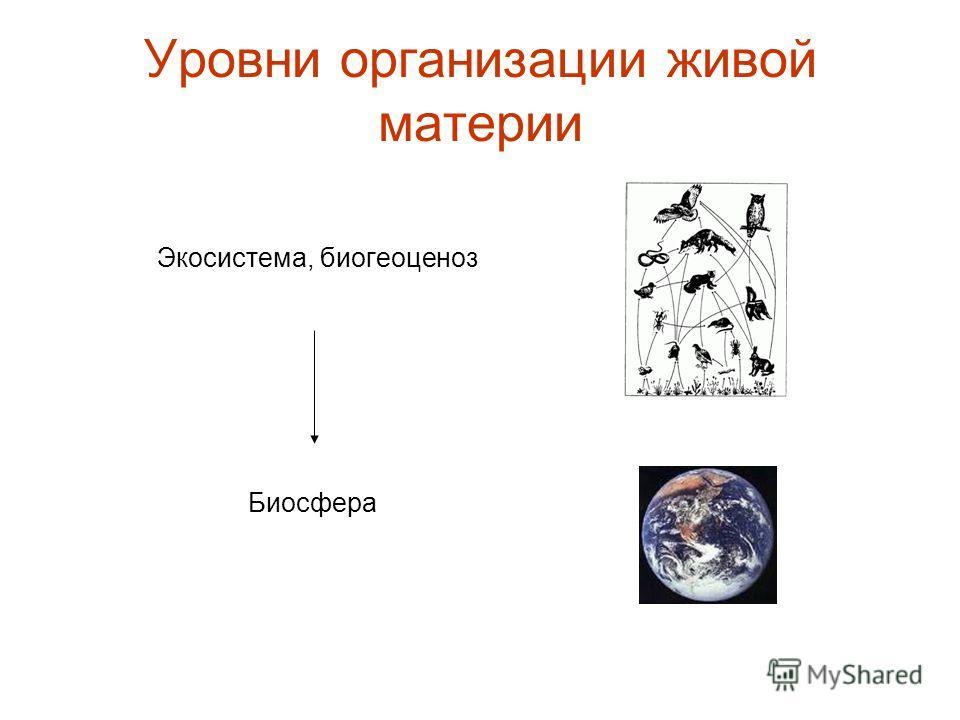 Уровни организации живой материи Экосистема, биогеоценоз Биосфера