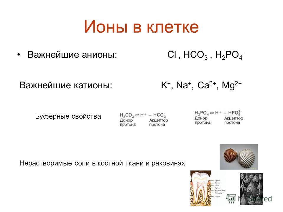Ионы в клетке Важнейшие анионы: Cl -, HCO 3 -, H 2 PO 4 - Важнейшие катионы: K +, Na +, Ca 2+, Mg 2+ Буферные свойства Нерастворимые соли в костной ткани и раковинах