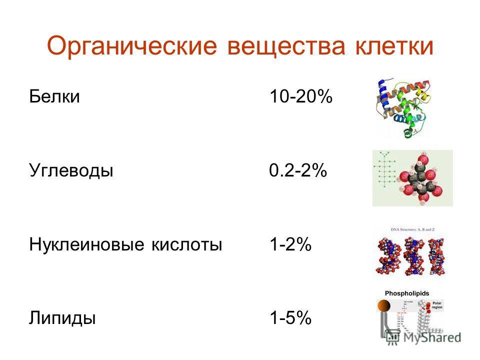Органические вещества клетки Белки 10-20% Углеводы 0.2-2% Нуклеиновые кислоты1-2% Липиды1-5%