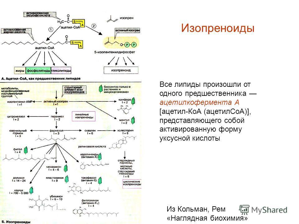 Изопреноиды Все липиды произошли от одного предшественника ацетилкофермента А [ацетил-КоА (ацетилCoA)], представляющего собой активированную форму уксусной кислоты Из Кольман, Рем «Наглядная биохимия»