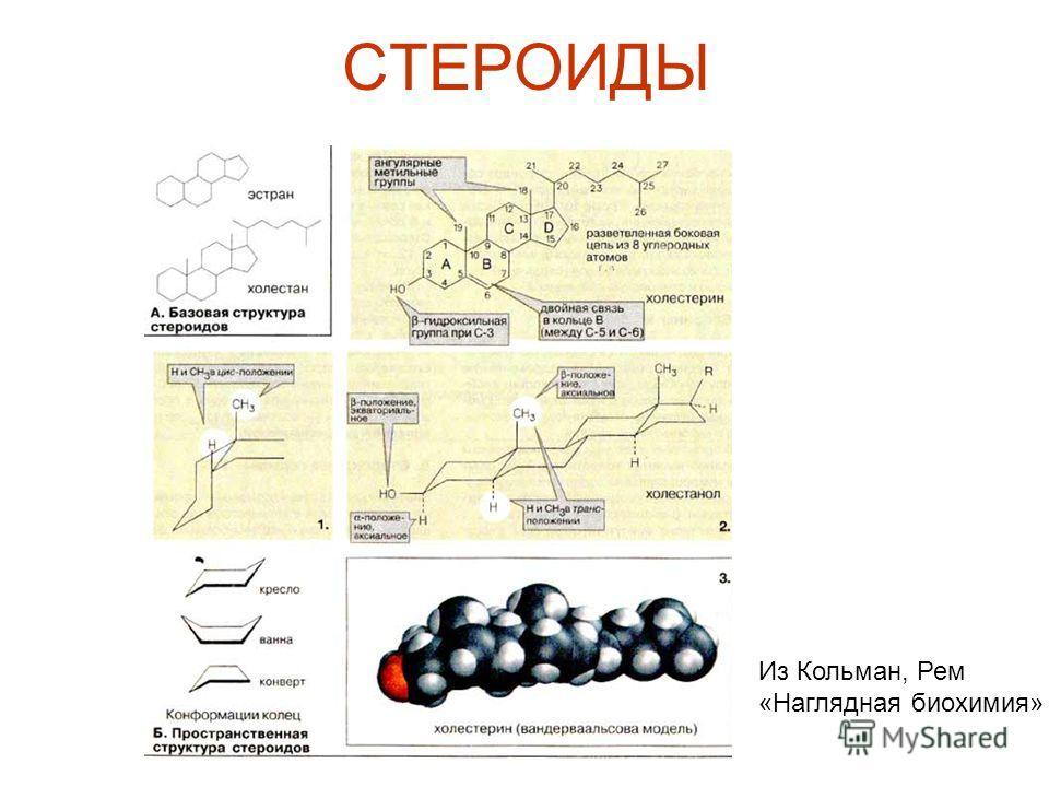 СТЕРОИДЫ Из Кольман, Рем «Наглядная биохимия»