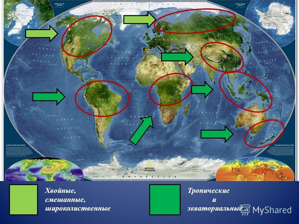 Хвойные, смешанные, широколиственные Тропические и экваториальные