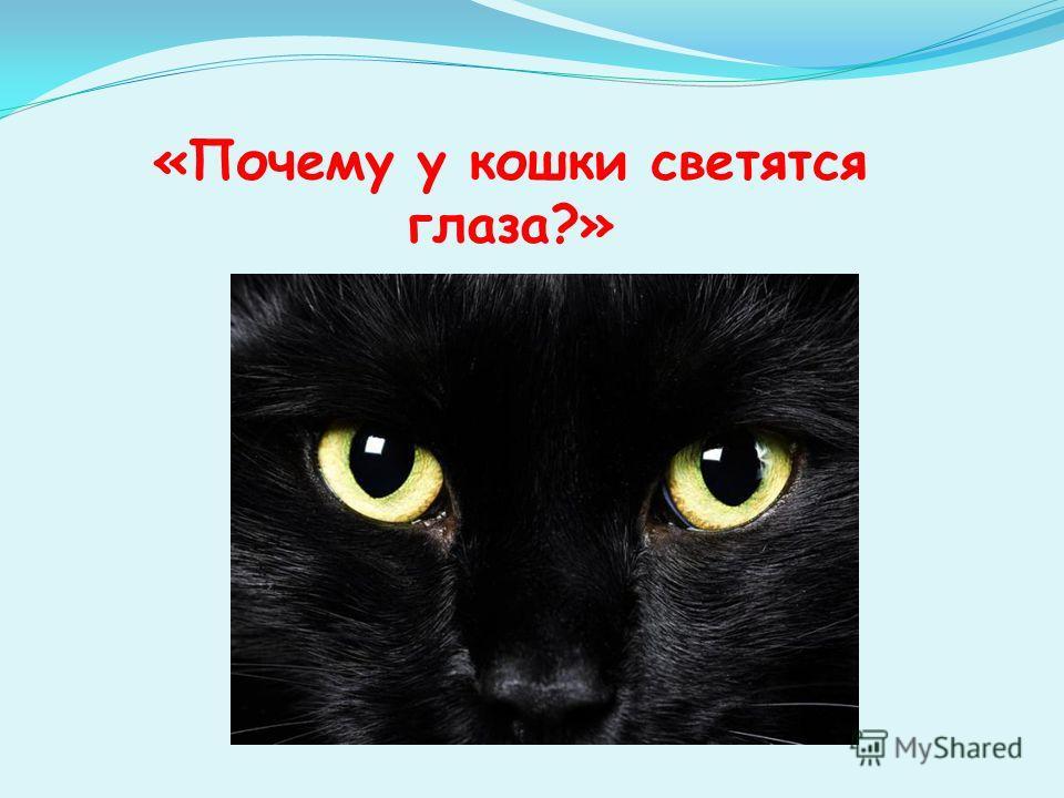 «Почему у кошки светятся глаза?»