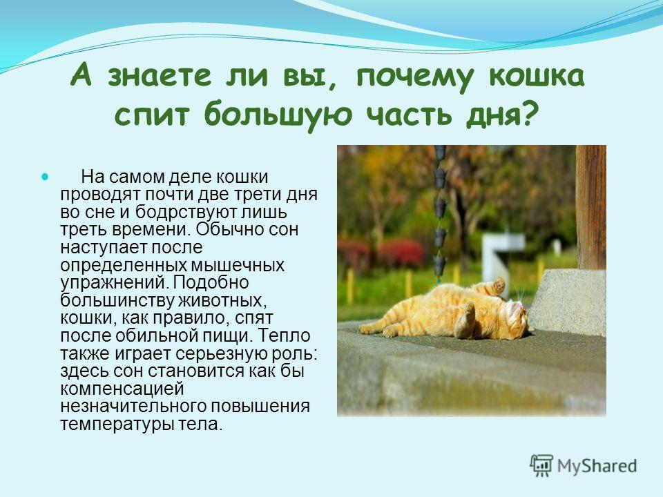А знаете ли вы, почему кошка спит большую часть дня? На самом деле кошки проводят почти две трети дня во сне и бодрствуют лишь треть времени. Обычно сон наступает после определенных мышечных упражнений. Подобно большинству животных, кошки, как правил