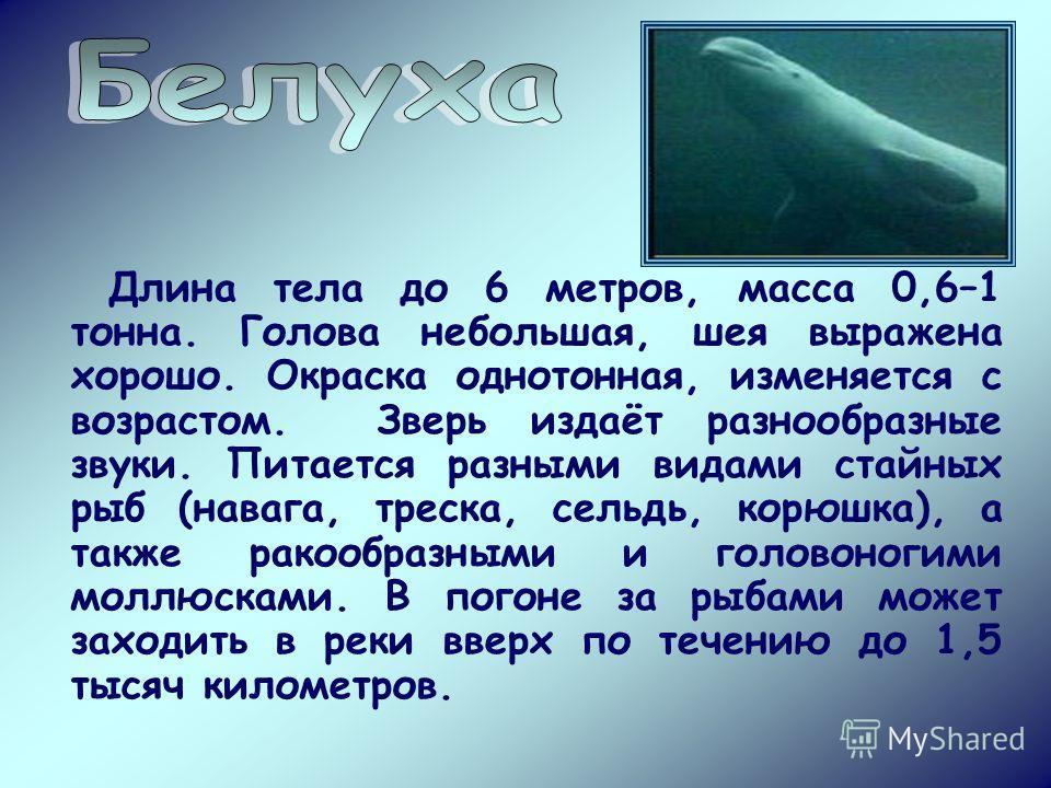 Длина тела до 6 метров, масса 0,6–1 тонна. Голова небольшая, шея выражена хорошо. Окраска однотонная, изменяется с возрастом. Зверь издаёт разнообразные звуки. Питается разными видами стайных рыб (навага, треска, сельдь, корюшка), а также ракообразны