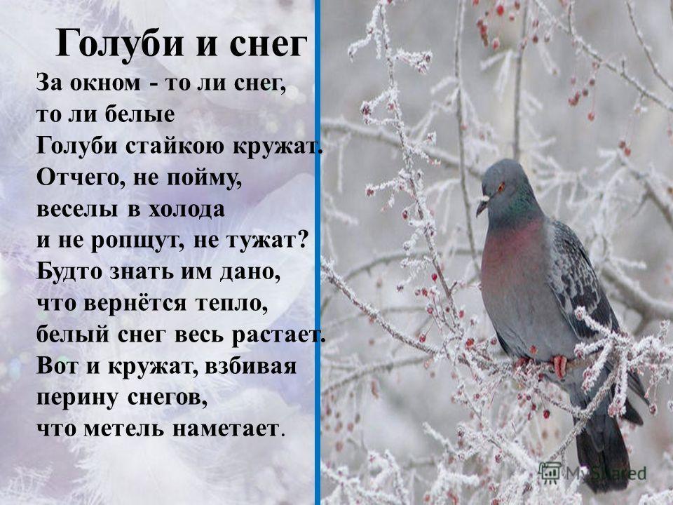 Голуби и снег За окном - то ли снег, то ли белые Голуби стайкою кружат. Отчего, не пойму, веселы в холода и не ропщут, не тужат? Будто знать им дано, что вернётся тепло, белый снег весь растает. Вот и кружат, взбивая перину снегов, что метель наметае