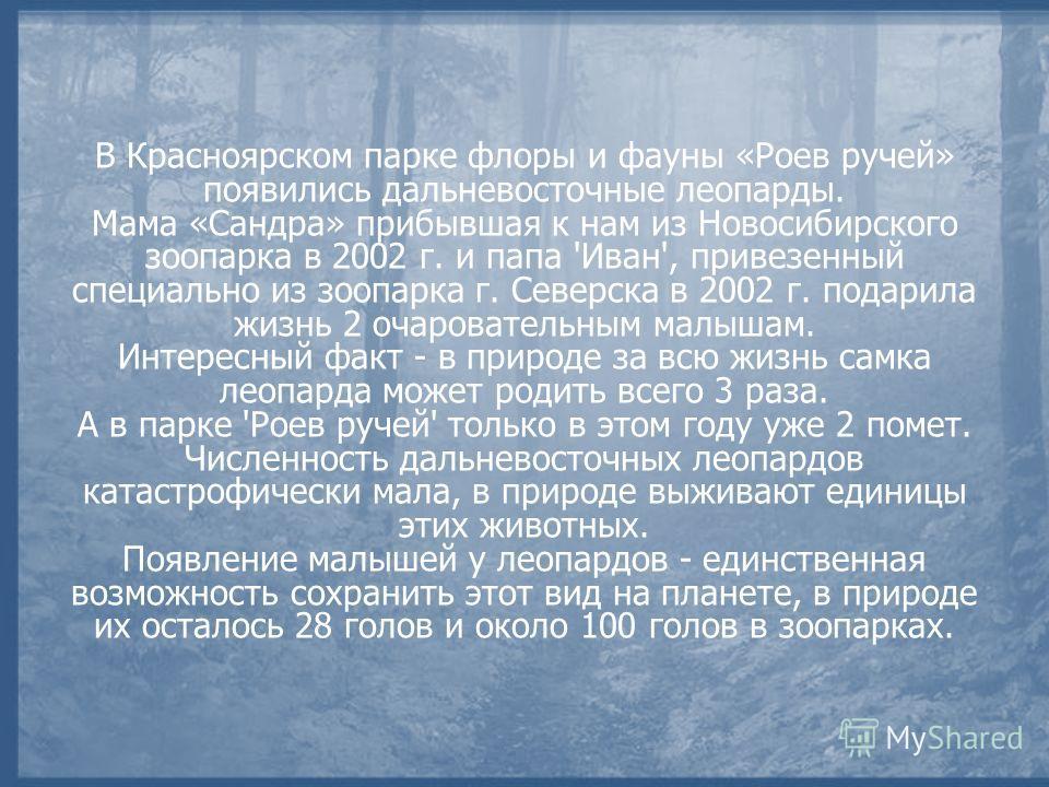 В Красноярском парке флоры и фауны «Роев ручей» появились дальневосточные леопарды. Мама «Сандра» прибывшая к нам из Новосибирского зоопарка в 2002 г. и папа 'Иван', привезенный специально из зоопарка г. Северска в 2002 г. подарила жизнь 2 очаровател
