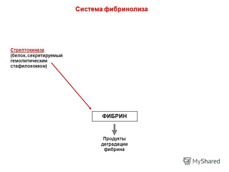 ФИБРИН Продукты деградации фибрина Стрептокиназа (белок, секретируемый гемолитическим стафилококком) Система фибринолиза