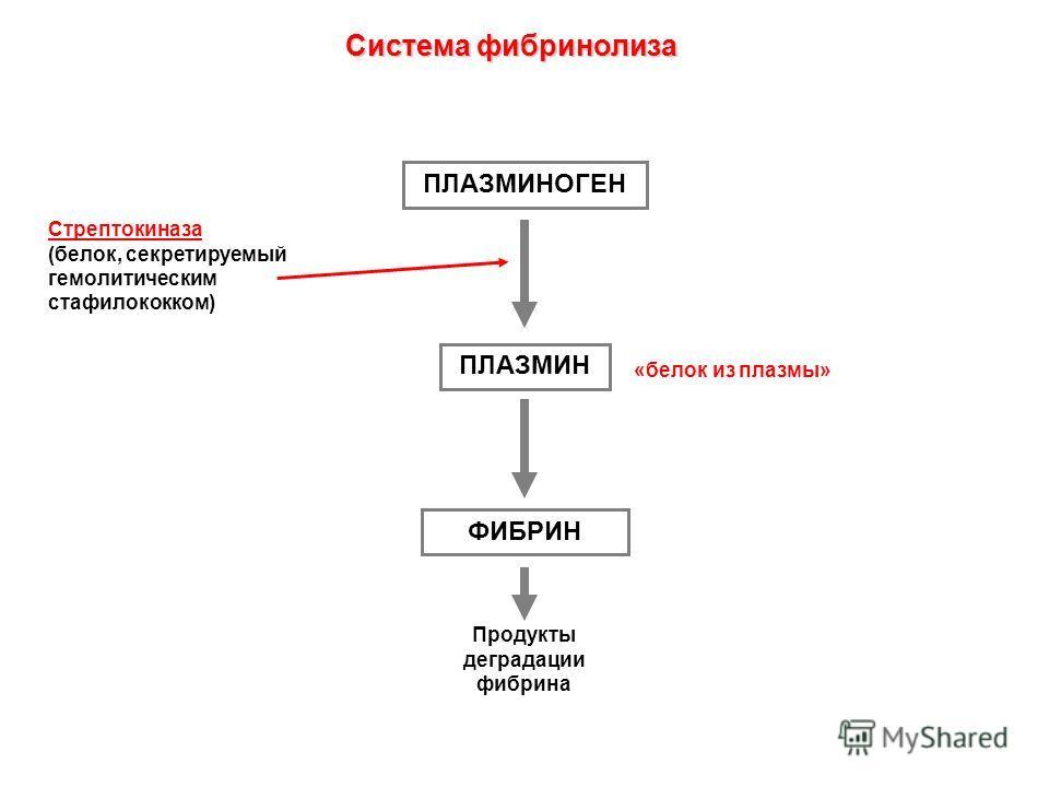 ПЛАЗМИНОГЕН ПЛАЗМИН ФИБРИН Продукты деградации фибрина Стрептокиназа (белок, секретируемый гемолитическим стафилококком) «белок из плазмы» Система фибринолиза
