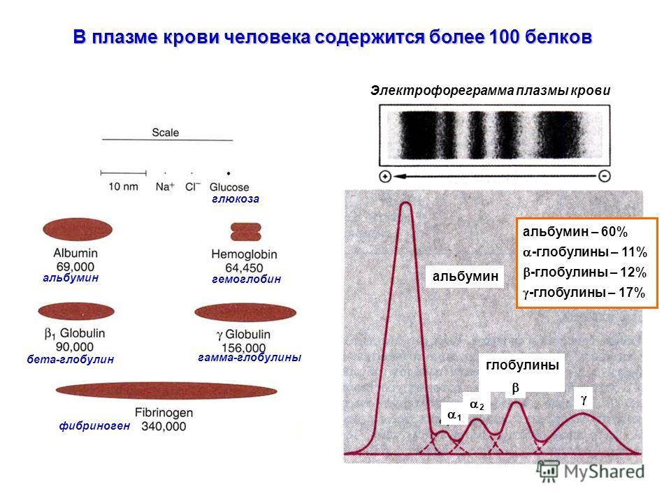 Электрофореграмма плазмы крови альбумин гамма-глобулины гемоглобин глюкоза бета-глобулин фибриноген альбумин глобулины 1 2 альбумин – 60% -глобулины – 11% -глобулины – 12% -глобулины – 17% В плазме крови человека содержится более 100 белков