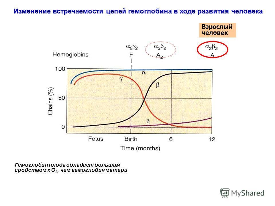 Изменение встречаемости цепей гемоглобина в ходе развития человека Взрослый человек Гемоглобин плода обладает большим сродством к О 2, чем гемоглобин матери
