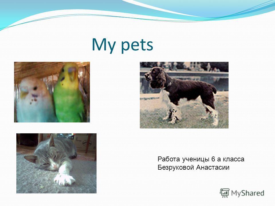 My pets Работа ученицы 6 а класса Безруковой Анастасии
