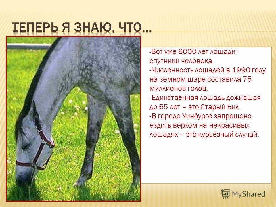 - Вот уже 6000 лет лошади - спутники человека. -Численность лошадей в 1990 году на земном шаре составила 75 миллионов голов. -Единственная лошадь дожившая до 65 лет – это Старый Ьил. -В городе Уинбурге запрещено ездить верхом на некрасивых лошадях –