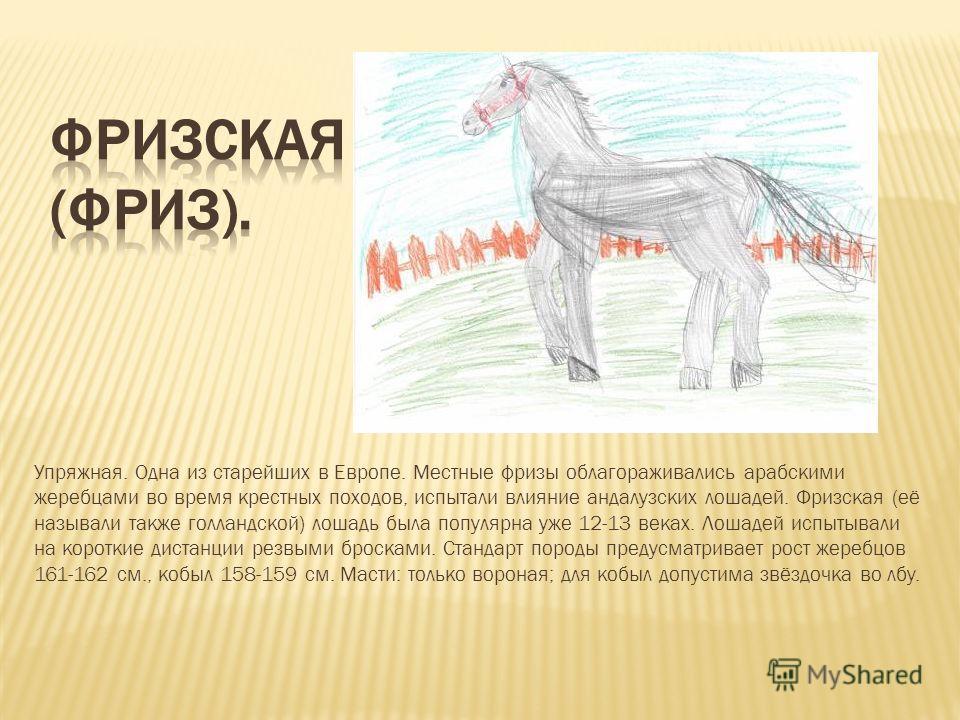 Упряжная. Одна из старейших в Европе. Местные фризы облагораживались арабскими жеребцами во время крестных походов, испытали влияние андалузских лошадей. Фризская (её называли также голландской) лошадь была популярна уже 12-13 веках. Лошадей испытыва
