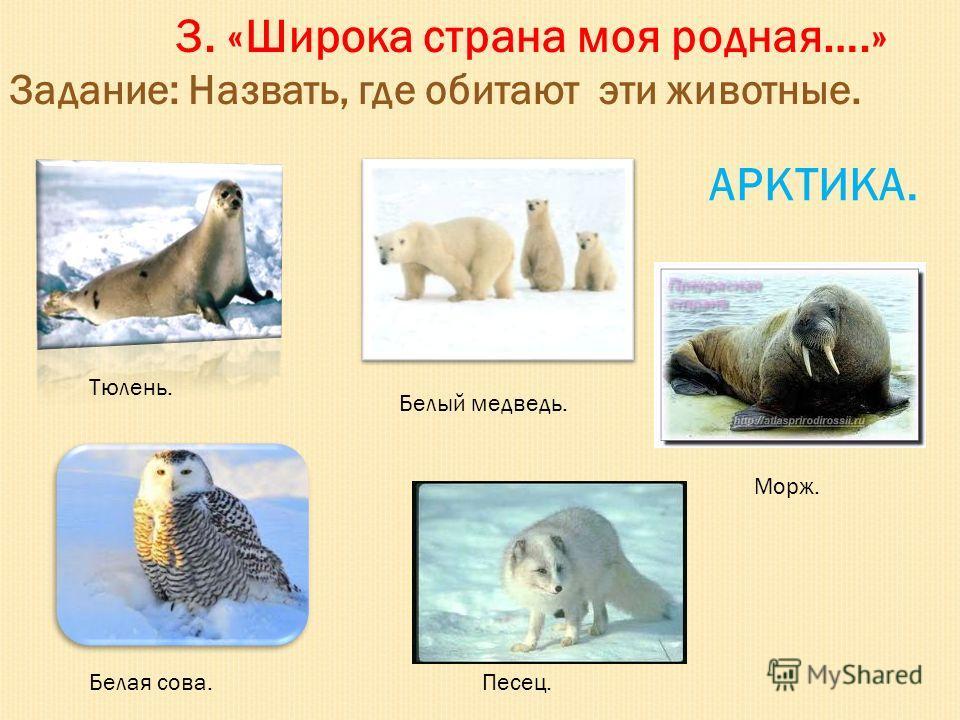 3. «Широка страна моя родная….» Задание: Назвать, где обитают эти животные. Тюлень. Белый медведь. Морж. Белая сова.Песец. АРКТИКА.