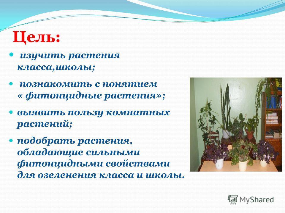 Цель: изучить растения класса,школы; познакомить с понятием « фитонцидные растения»; выявить пользу комнатных растений; подобрать растения, обладающие сильными фитонцидными свойствами для озеленения класса и школы.