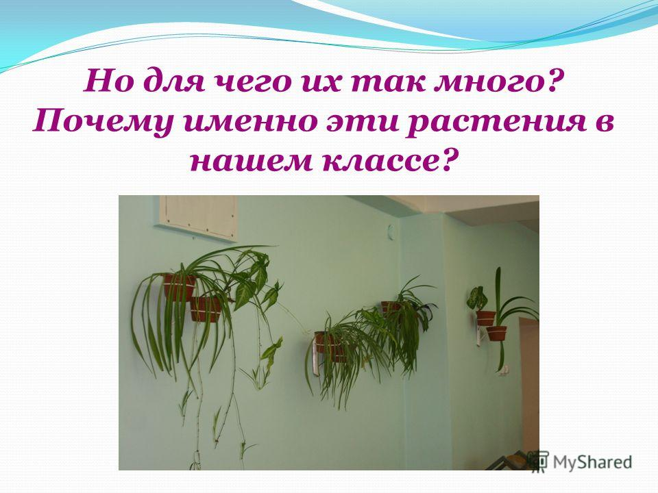 Но для чего их так много? Почему именно эти растения в нашем классе?