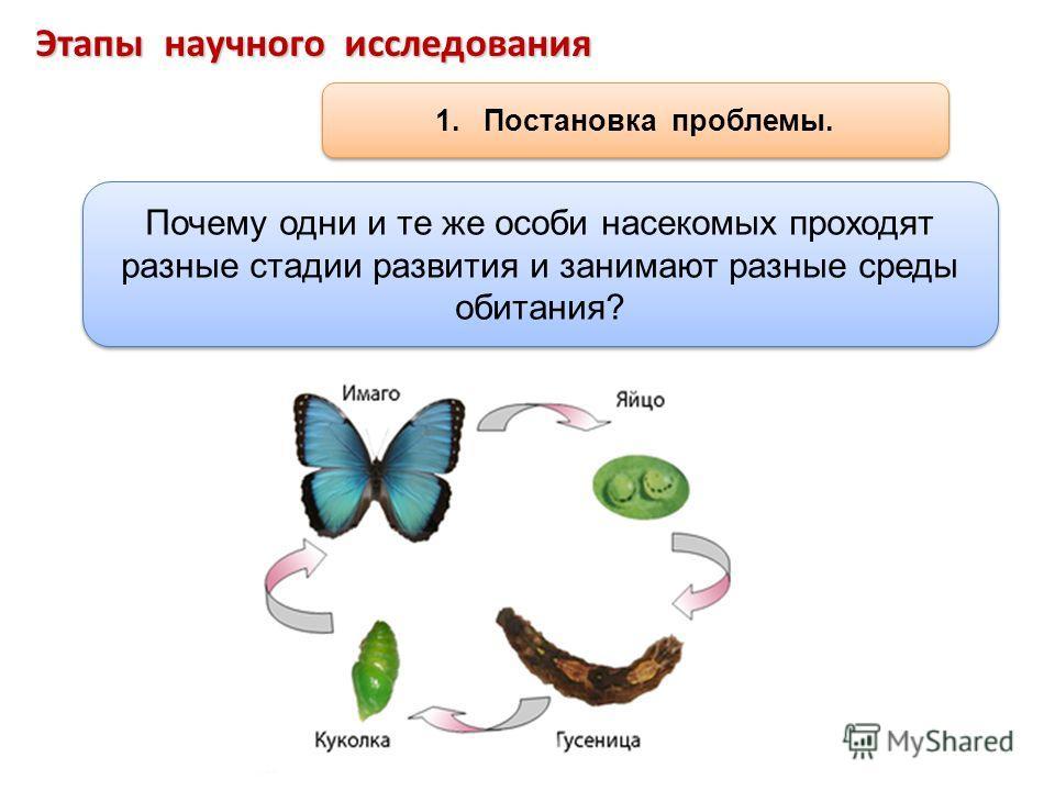 Этапы научного исследования 1. Постановка проблемы. Почему одни и те же особи насекомых проходят разные стадии развития и занимают разные среды обитания?