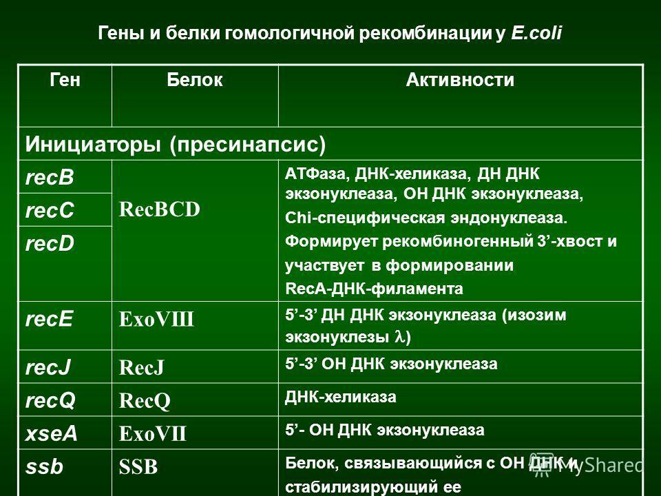 ГенБелокАктивности Инициаторы (пресинапсис) recB RecBCD АТФаза, ДНК-хеликаза, ДН ДНК экзонуклеаза, ОН ДНК экзонуклеаза, Chi-специфическая эндонуклеаза. Формирует рекомбиногенный 3-хвост и участвует в формировании RecA-ДНК-филамента recC recD recE Exo