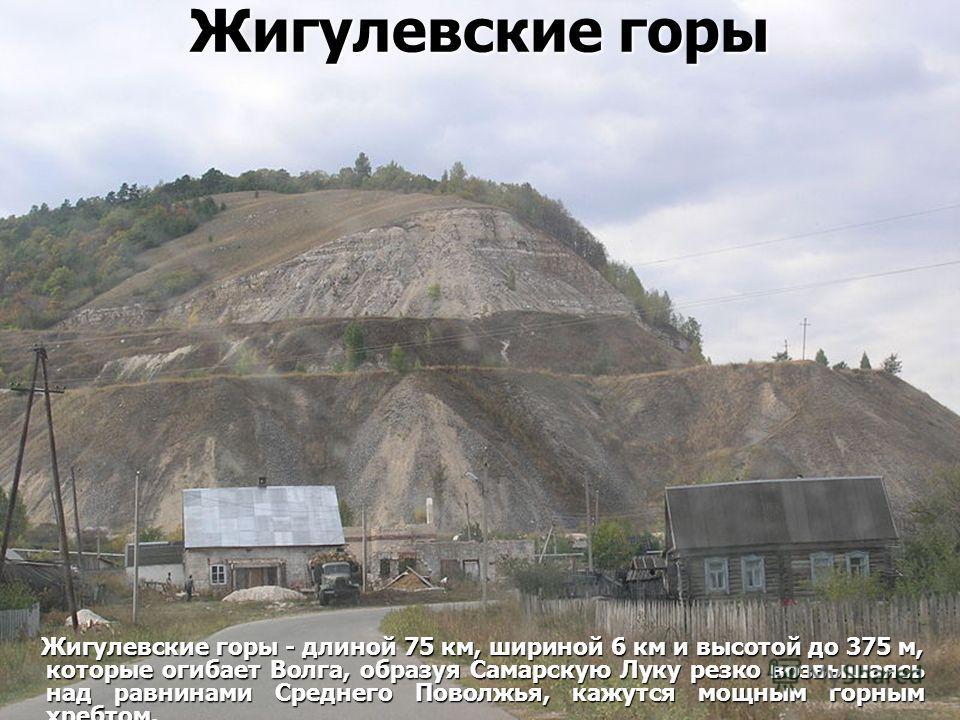 Жигулевские горы Жигулевские горы - длиной 75 км, шириной 6 км и высотой до 375 м, которые огибает Волга, образуя Самарскую Луку резко возвышаясь над равнинами Среднего Поволжья, кажутся мощным горным хребтом. Жигулевские горы - длиной 75 км, шириной