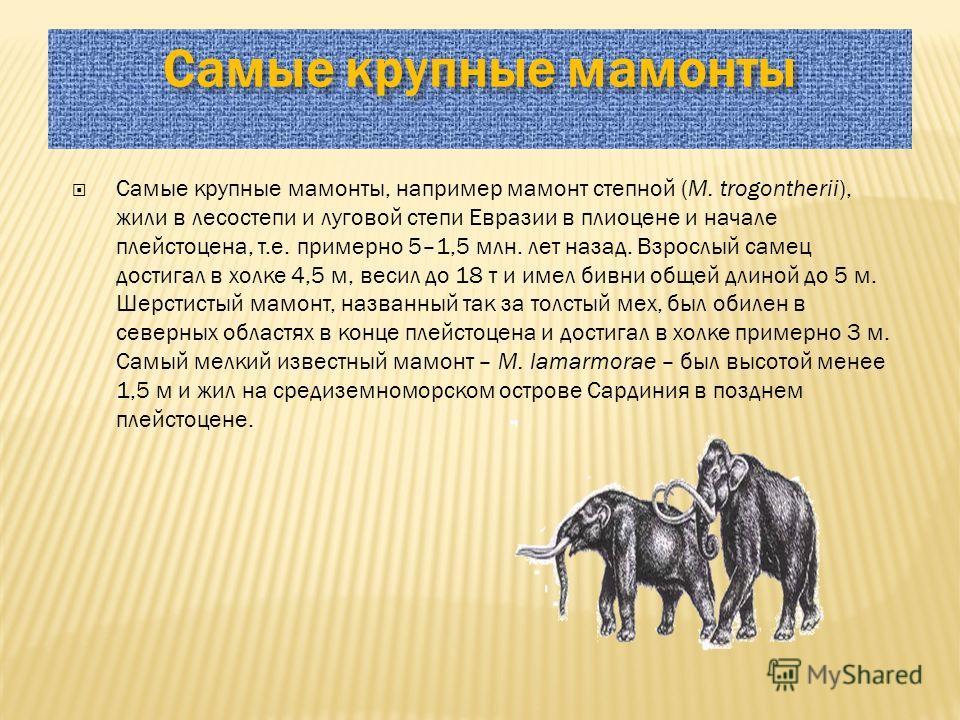 Самые крупные мамонты Самые крупные мамонты, например мамонт степной (M. trogontherii), жили в лесостепи и луговой степи Евразии в плиоцене и начале плейстоцена, т.е. примерно 5–1,5 млн. лет назад. Взрослый самец достигал в холке 4,5 м, весил до 18 т