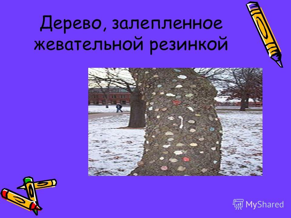 Дерево, залепленное жевательной резинкой