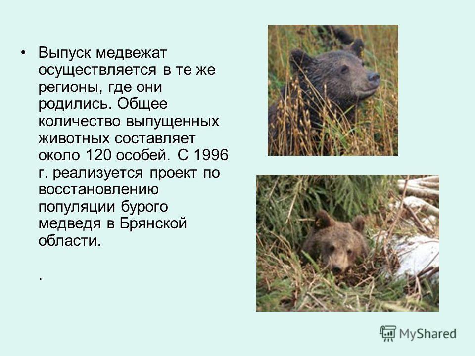 Выпуск медвежат осуществляется в те же регионы, где они родились. Общее количество выпущенных животных составляет около 120 особей. С 1996 г. реализуется проект по восстановлению популяции бурого медведя в Брянской области..Выпуск медвежат осуществля