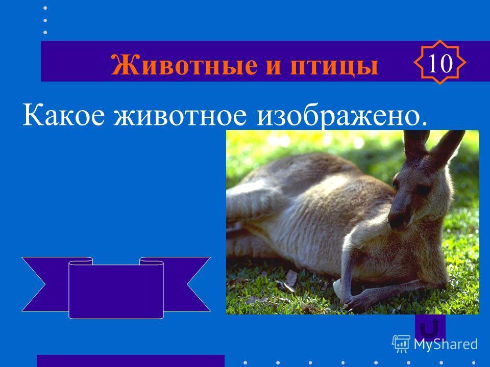 Животные и птицы Какое животное изображено? утконос 10