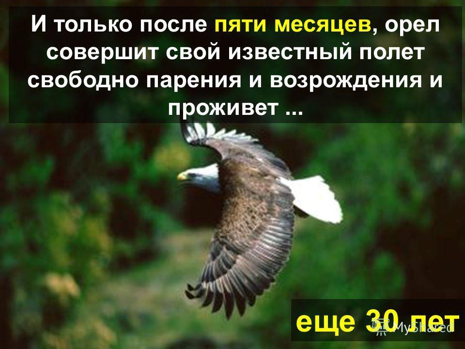 Тогда когда его новые когти вырастут, орел начнет выдергивать свои старые перья
