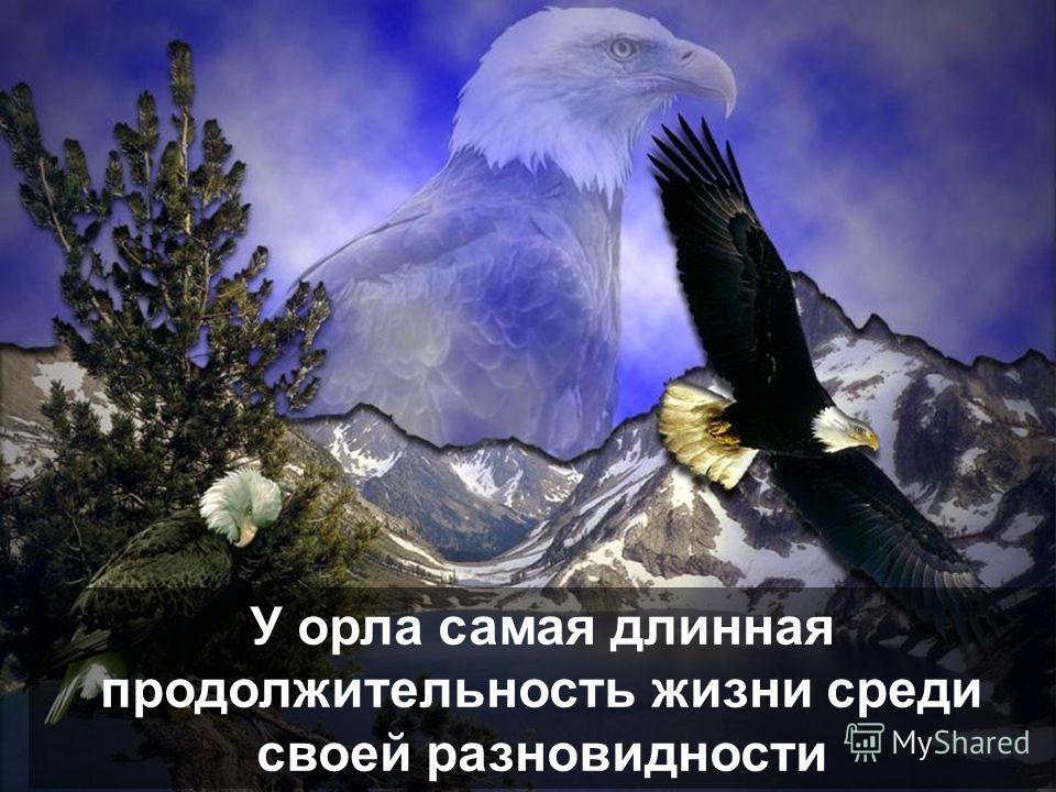 История орла… www.nuridacenter.com