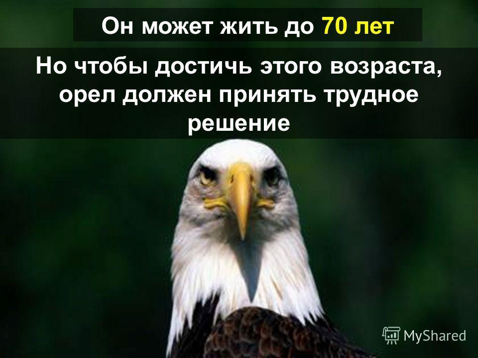 У орла самая длинная продолжительность жизни среди своей разновидности